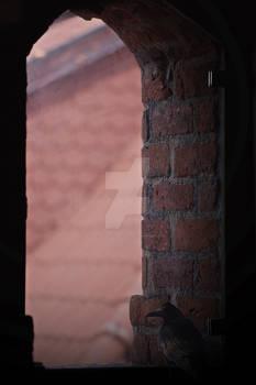 Gawron w oknie  (Bird in window)