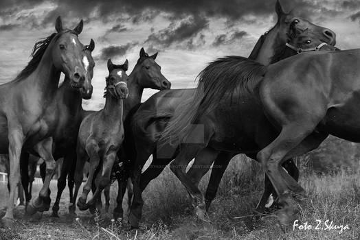 Horses (konie)