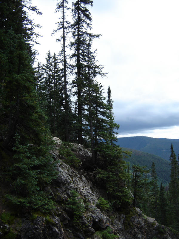 Dark pines by lilymaid7