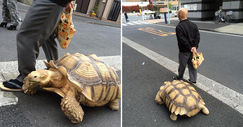 Sulcata tortoise taking a stroll by Fushigi-Okami