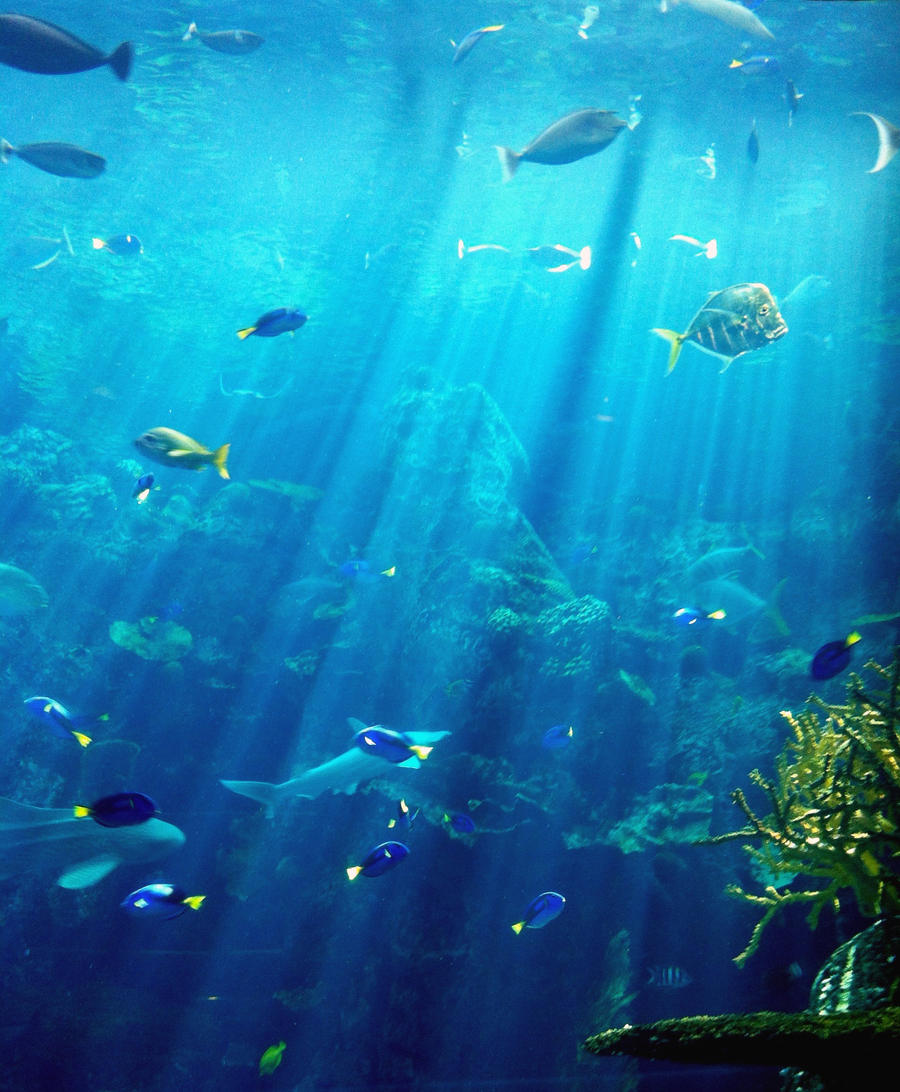 Under The Sea 329093287