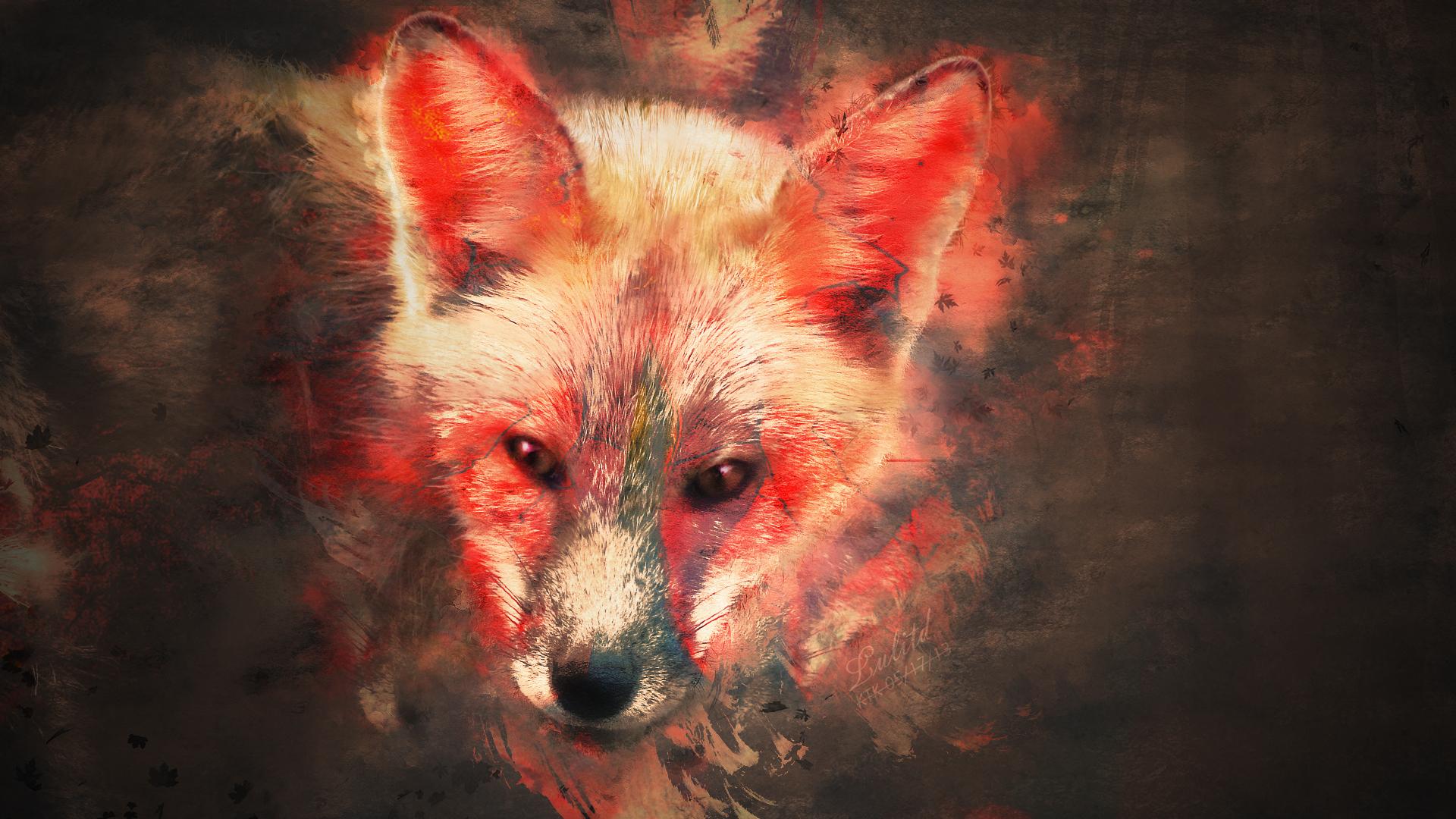 A splash of Fox Wallpaper