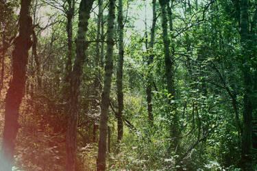 a forests son. by AshleyMae