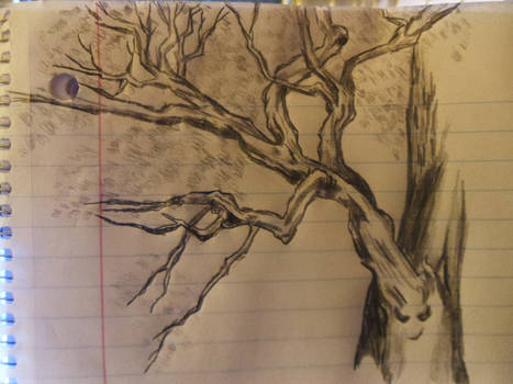 A Quick Pencil Sketch Of A Broad Leaved Tree