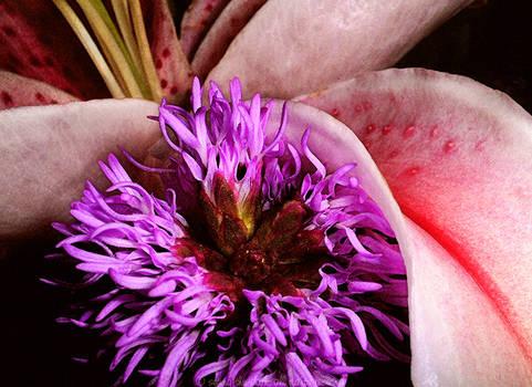 Purpleosity