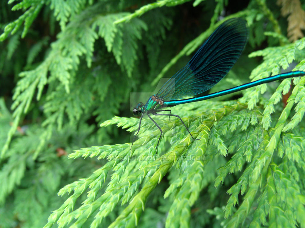 Blue Dragonfly by CharrChan