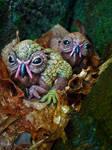 Owldillets II