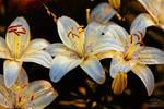 Spring 0264