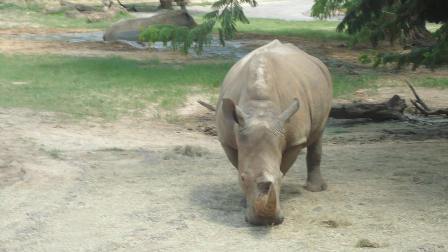 White Rhino by takuya36diablo