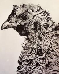 Stick Chicken Illustration
