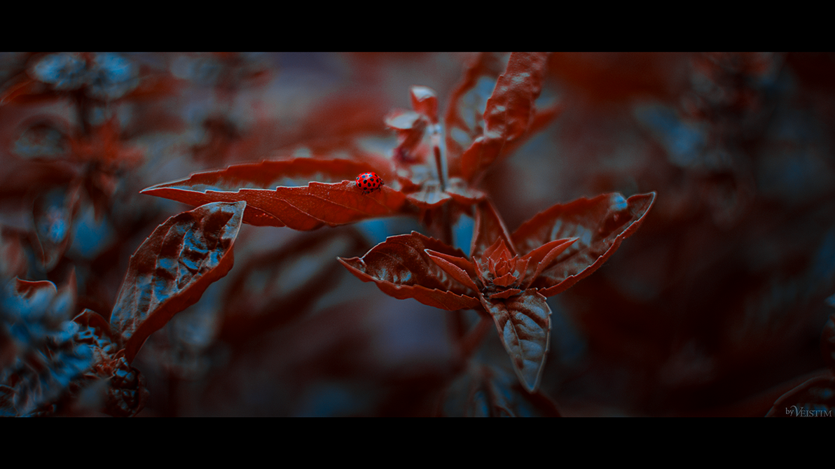 Ladybug Rhys by Veistim