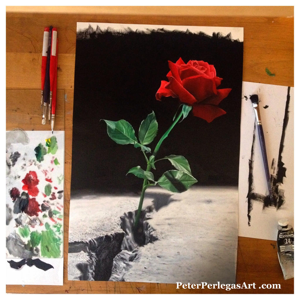 Rose that grew from concrete by peterperlegas on DeviantArt