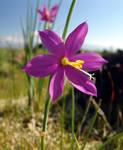 Wild Flower 01