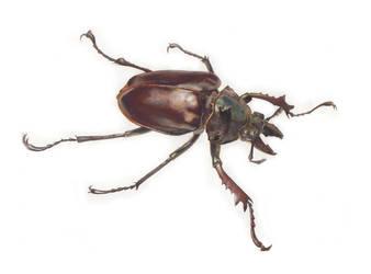 Beetle by Natalie2000