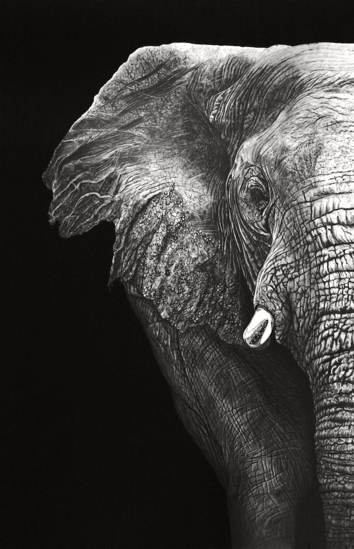 Elephant (Pencil) by Paul-Shanghai
