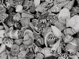 Shells by Paul-Shanghai