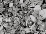 Shells by Paul-Shanghai