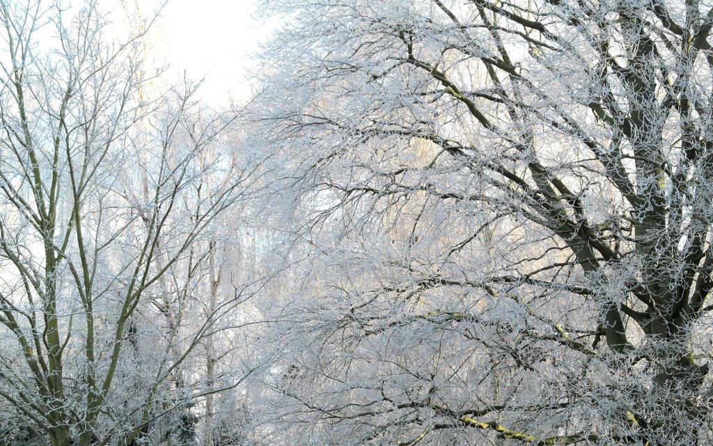 Winter by Becky125
