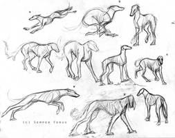 Sketches - Sight Hounds by SemperFerus