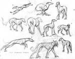 Sketches - Sight Hounds
