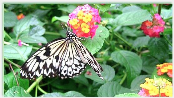 Butterfly by yee-heartifilia