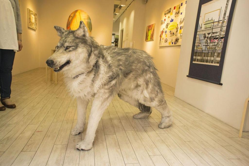 Wolf furry costume - photo#27