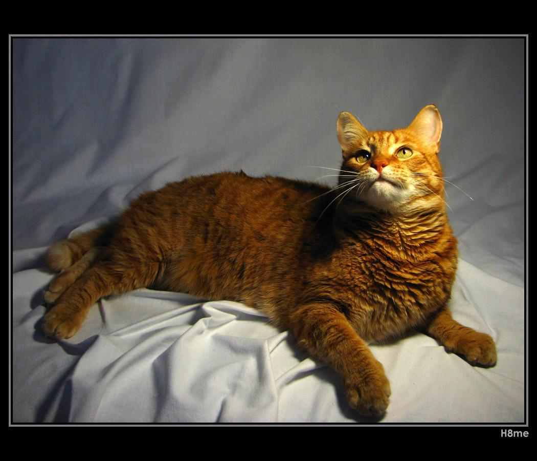 My tomcat by H8me-CZ