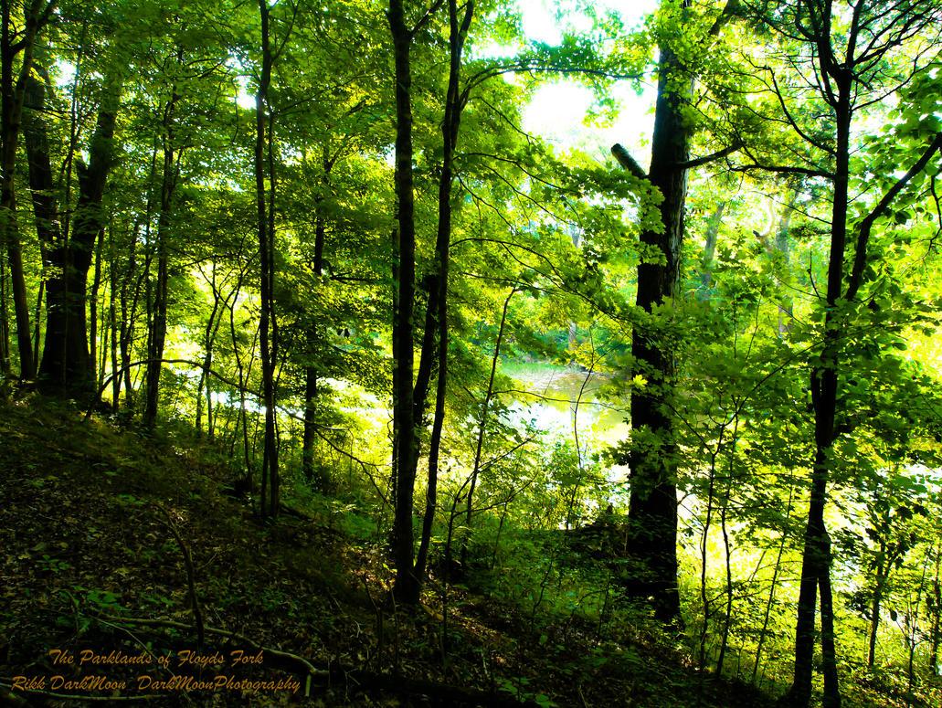 00-TheParklandsOfFloydsFork-P1010130-2-WP-Mast by darkmoonphoto