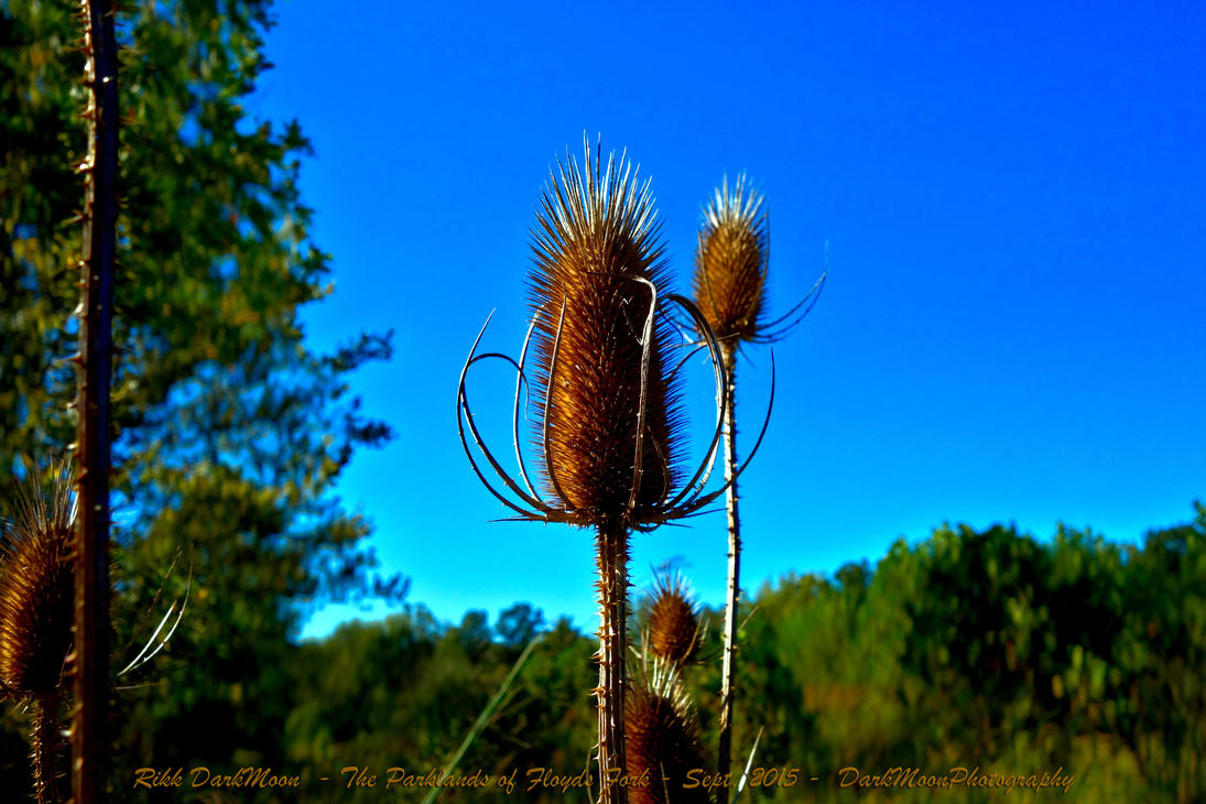00-ParklandsOfFloydsFork-Sept2015-DSC09127-HDR-WP- by darkmoonphoto