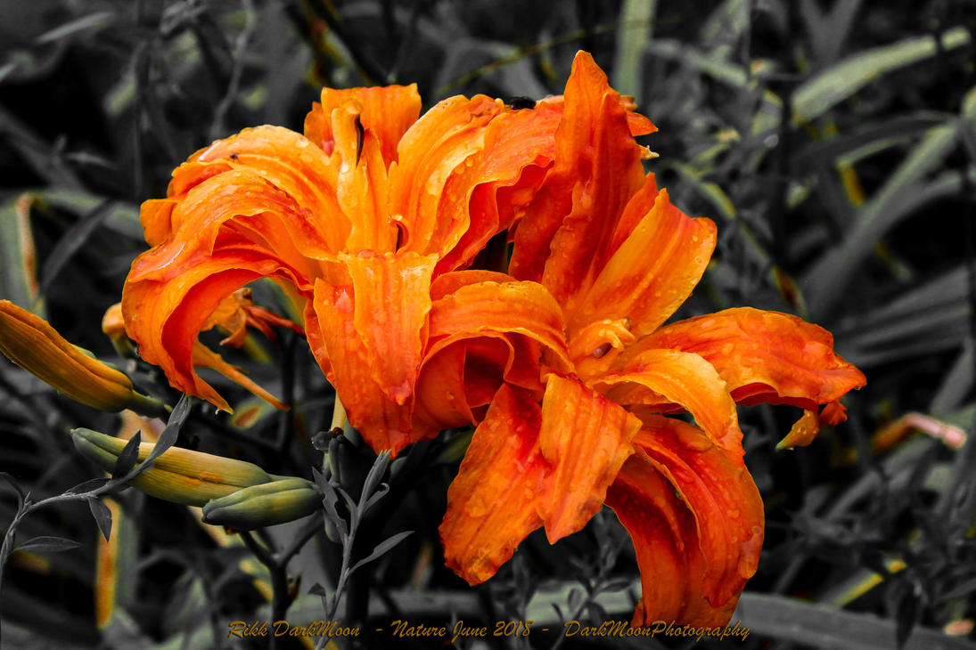 00-Nature-June2018-IMG-5896-2-BW-WP-Master by darkmoonphoto