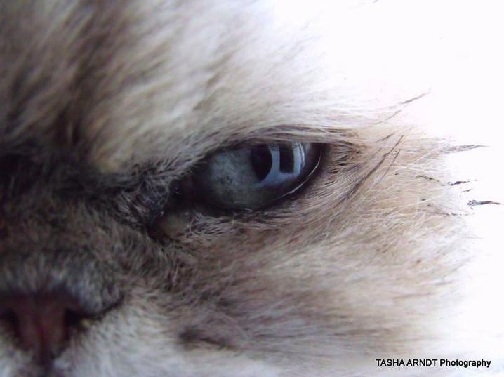 Cat eye by tasha-killer-coma