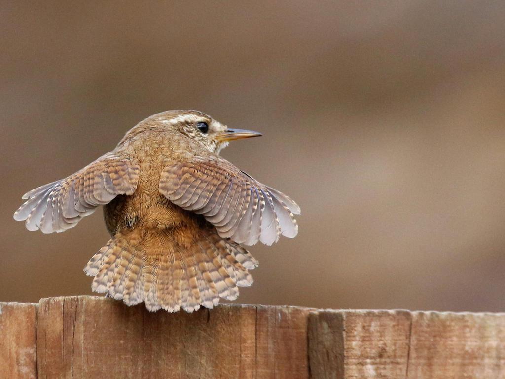 Spread those little wings by pell21