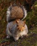 Squirrel 19-12-17