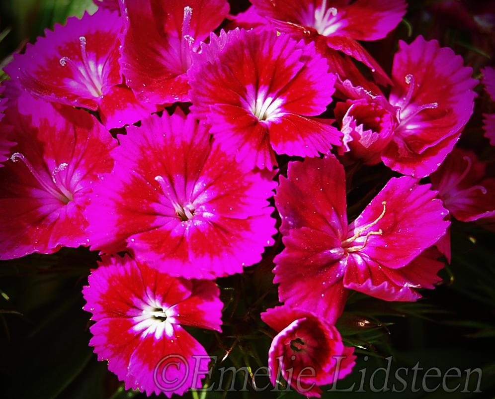 Pinkred flowers by mli93 on deviantart pinkred flowers by mli93 mightylinksfo