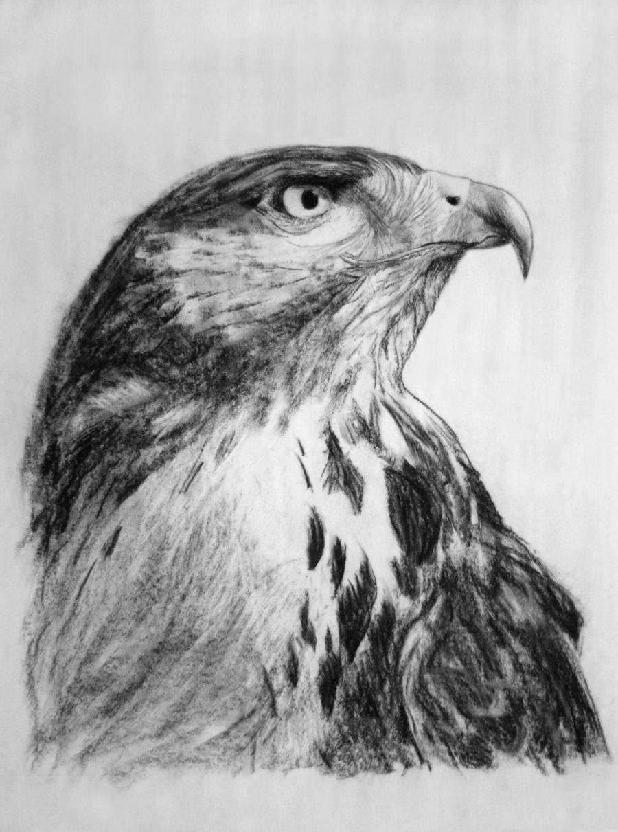 Charcoal Bird By Augustoflores On DeviantArt