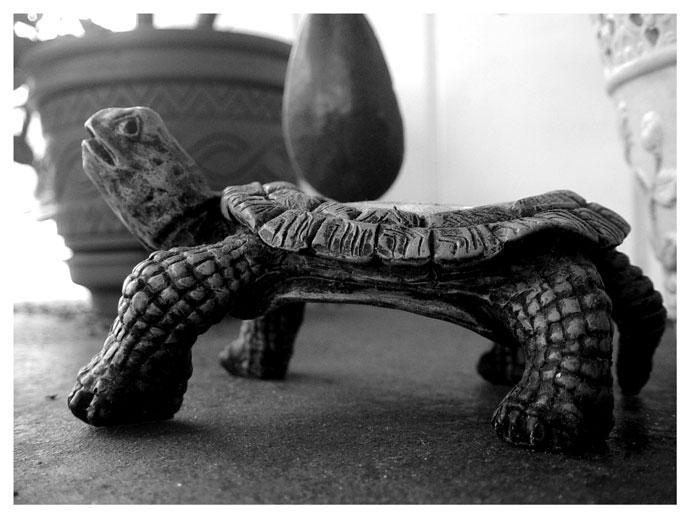Turtle...Turtle by sugabear