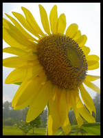 Sun-light by sugabear