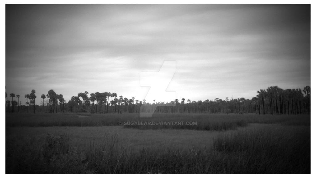 Marsh by sugabear