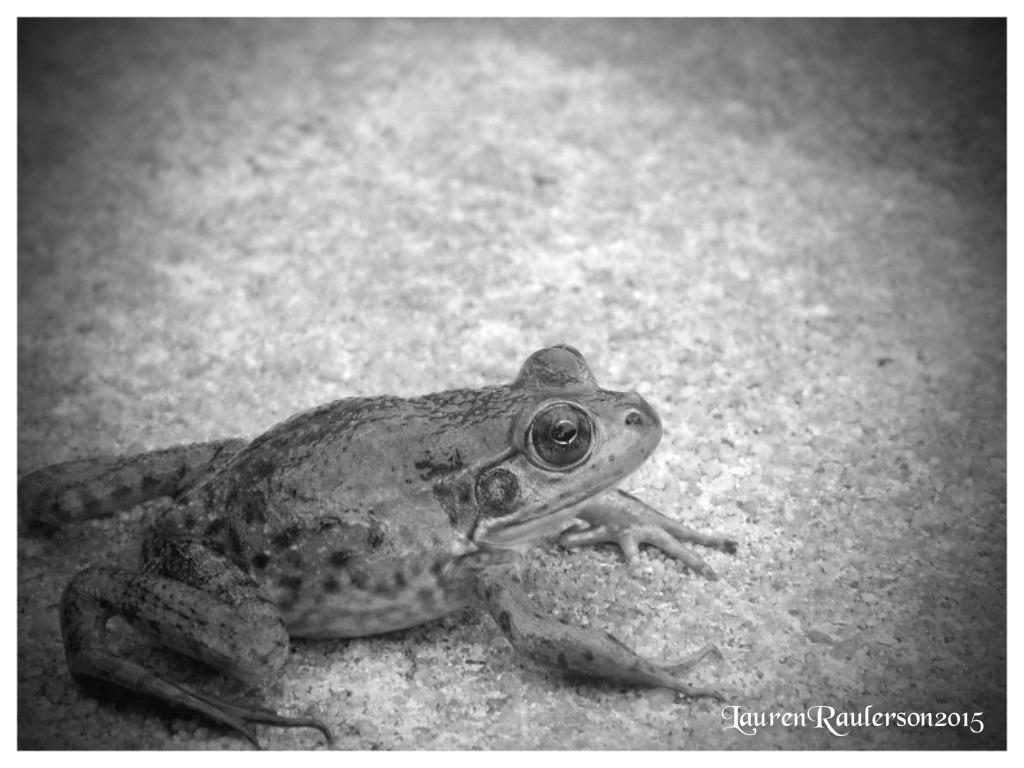 Frog2- by sugabear