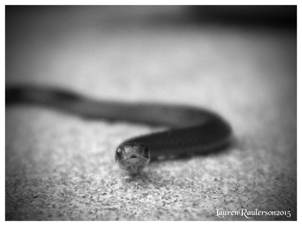 Itty Bitty Snake by sugabear