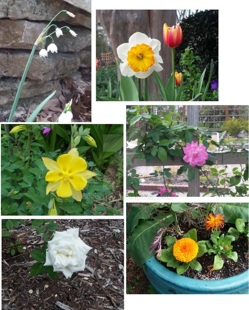 Single flowers 1 by Coro-Yuki