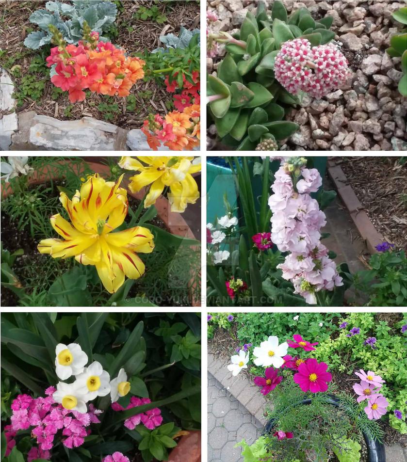 Single flowers 2 by Coro-Yuki