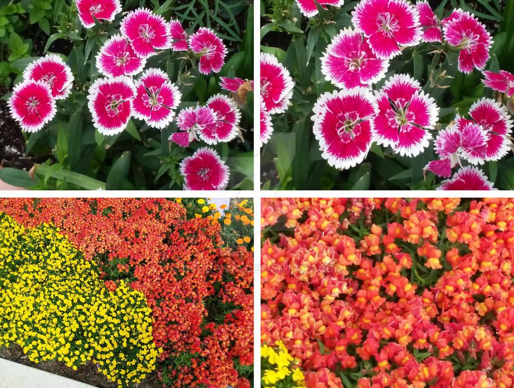 Flower Group 2 by Coro-Yuki