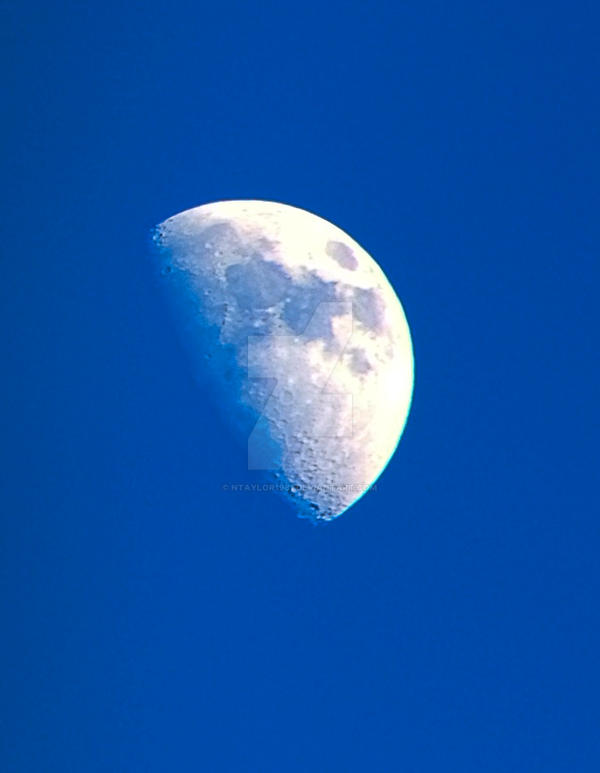 Moon from the back yard