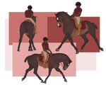 Raposa Dressage Elites | Relaxation