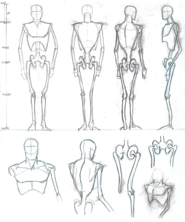 the human body plan study of Human physiology is the study of how the human body functions this includes the mechanical, physical, bioelectrical, and biochemical functions of humans in good.