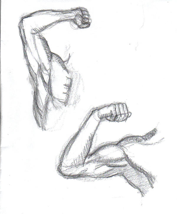 Gallery For > Two Muscular Arms Drawing Arm Muscles Drawing
