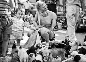 The puppy market by sandas04