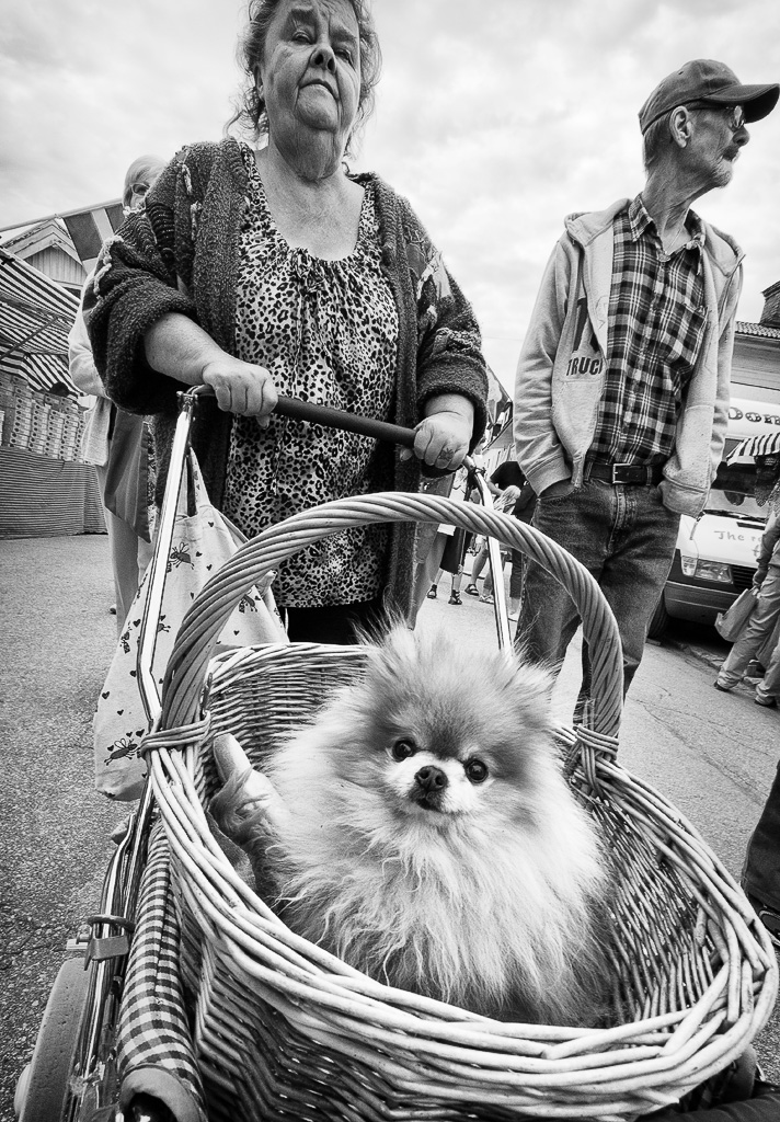Dog in a basket by sandas04