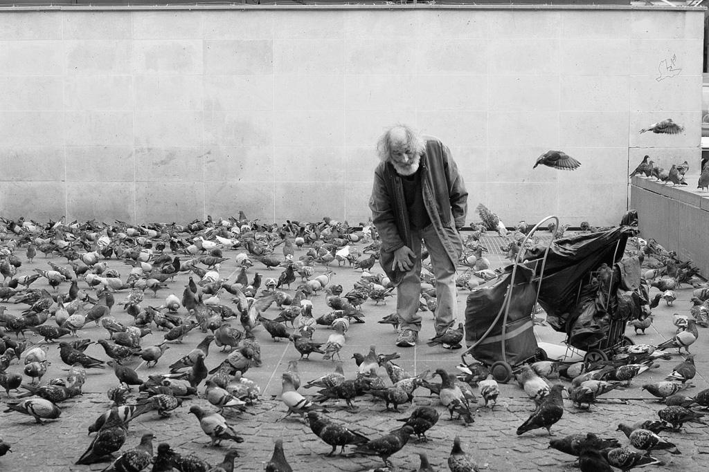 Pigeon Man by sandas04